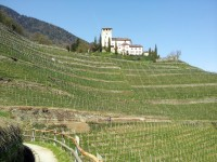 A WINEGROWING LAND CALLED SOUTH TYROL